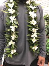 Lei for Him