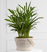 The Deeply Adored™ Palm Planter